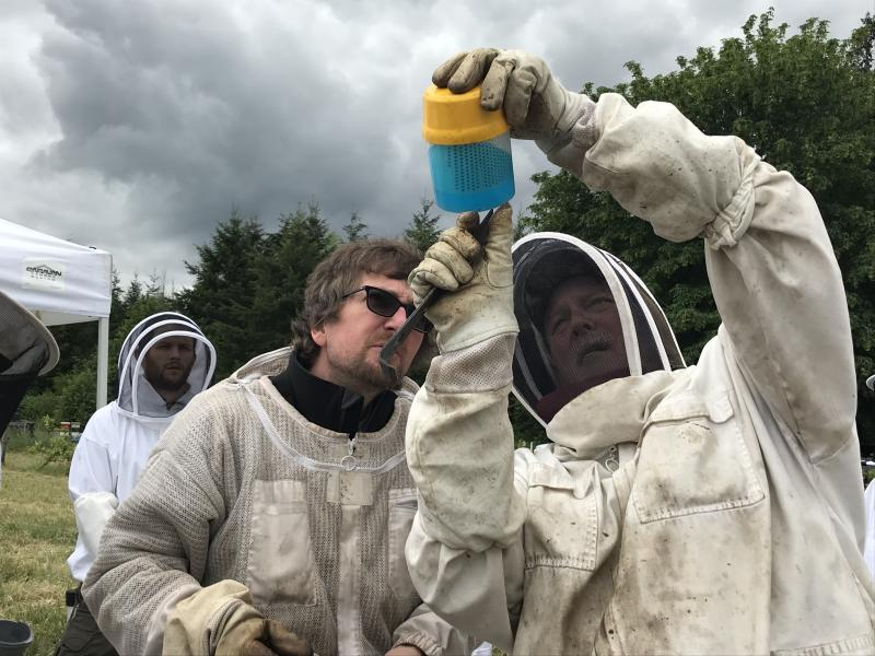 Mentors Rick Battin and Kevin Reichert inspecting a sample of bees for Varroa mi