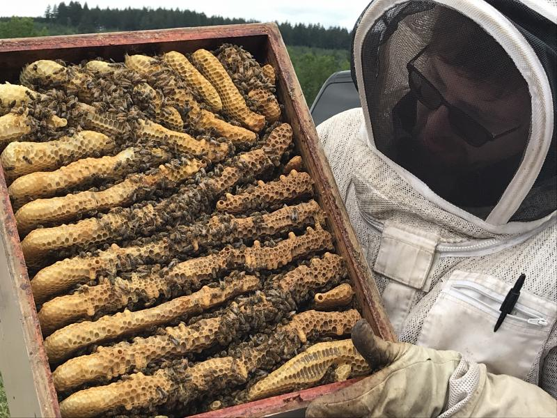 Mentor Rick Battin displays how bees built comb in the bottom of a top feeder
