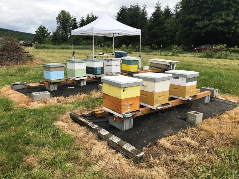 LCBA Teaching Apiary