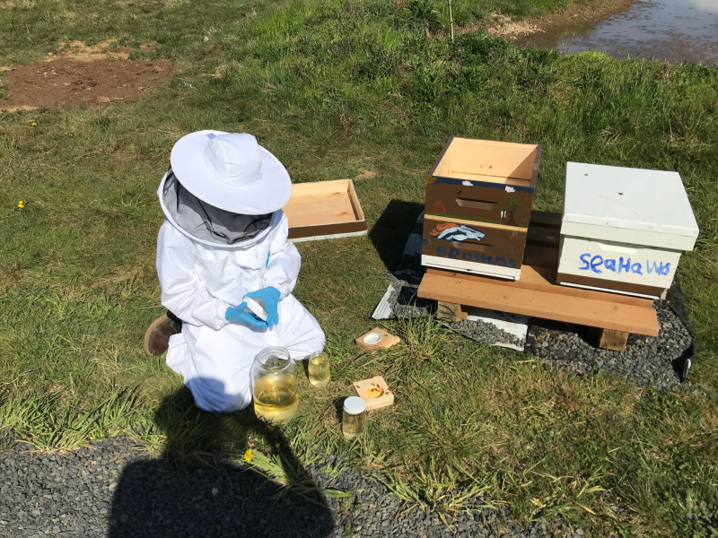 2018 Youth Scholar Caleb feeding his bees